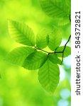 leaves of fresh green. leaves... | Shutterstock . vector #584372821