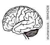 human brain | Shutterstock .eps vector #58442428