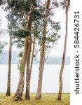 lagoa das furnas lake with... | Shutterstock . vector #584426731