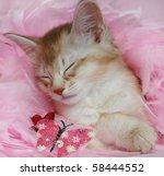Stock photo sleepy somali kitten on pink 58444552