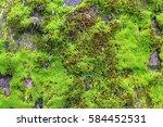 irish texture. green moss.... | Shutterstock . vector #584452531