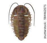 Trilobite ptychoparia 3d illustration - Trilobite ptychoparia animal lived in the Cambrian seas of Eurasia and North America.
