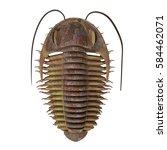 Trilobite Ptychoparia 3d...