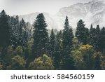 coniferous forest landscape... | Shutterstock . vector #584560159