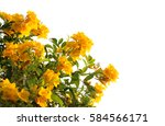 Stock photo yellow flower isolated 584566171