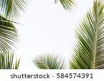 coconut leaf in spring summer... | Shutterstock . vector #584574391