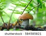 mushroom in the forest | Shutterstock . vector #584585821