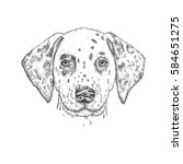 beautiful dalmatian painted by... | Shutterstock .eps vector #584651275