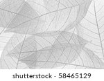 skeleton leaf background | Shutterstock . vector #58465129