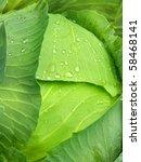 vegetables  cabbage | Shutterstock . vector #58468141