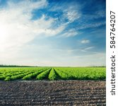 agricultural fields with... | Shutterstock . vector #584764207
