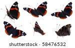 The Red Admiral  Vanessa...