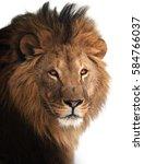 Lion Great King Portrait...