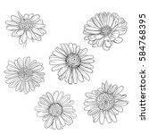daisy hand drawn sketches set.... | Shutterstock .eps vector #584768395