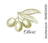 olives sketch of vector olive... | Shutterstock .eps vector #584823454