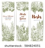 herbs and seasonings sketch... | Shutterstock .eps vector #584824051