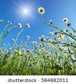meadow of daisy flower and blue ...   Shutterstock . vector #584882011