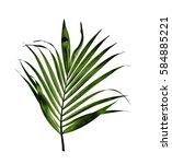 Green Leaf Of Palm Tree...