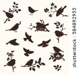 Vector Set Of Spring Bird And...