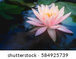 lotus flower in pond. | Shutterstock . vector #584925739