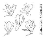 isolated magnolia sakura... | Shutterstock .eps vector #584932669