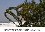 Flowering Bush  Pamukkale