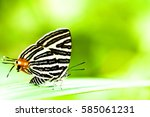 Black And White Butterfly...