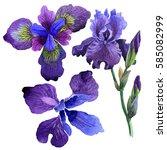 Wildflower Iris Flower In A...