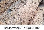 Bark Texture 2