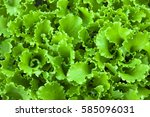 green salad leaves background | Shutterstock . vector #585096031