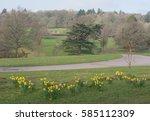 Bank Of Yellow Daffodils ...