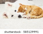 Stock photo berger blanc suisse puppy and kitten fluffy carpet 585129991
