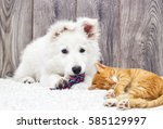 Berger Blanc Suisse Puppy And...