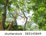 under the tree shade  low angle ... | Shutterstock . vector #585145849