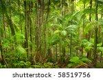 rainforest brindle creek... | Shutterstock . vector #58519756
