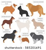 shepherd dog breeds  sheepdogs... | Shutterstock .eps vector #585201691