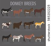 donkey breeds icon set. animal... | Shutterstock .eps vector #585202225