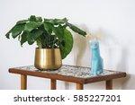 calathea musaica on a table... | Shutterstock . vector #585227201