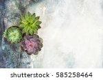 Succulent Plants On Concrete...