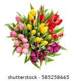 tulip flower isolated on white... | Shutterstock . vector #585258665