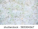 Stock photo white rose flower on wall background 585304367
