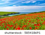 field of poppies and wild...