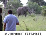 Observing A Wild Elephant In...