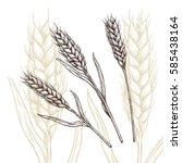 wheat ear vector illustration.... | Shutterstock .eps vector #585438164