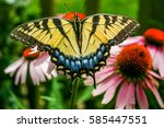 Yellow Swallowtail Butterfly...