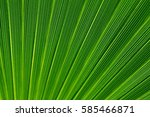 Lines And Textures Of Green...