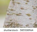 Macro Of Cherry Tree Bark ...
