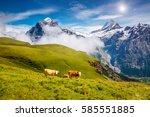 cows graze on alpine hills in... | Shutterstock . vector #585551885