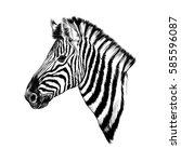 A Zebra Head Profile Sketch...