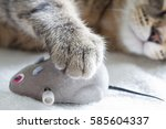 Stock photo sleepy cat and mouse toy on white towel 585604337
